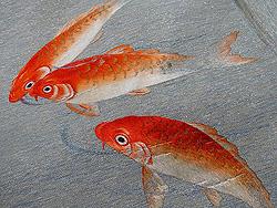 緋鯉の刺繍名古屋帯