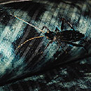 虫籠に月刺繍名古屋帯 質感・風合