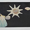 貝の図絽名古屋帯 前中心