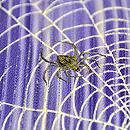 絽錦紗刷毛暈しに蜘蛛の巣付下 質感・風合