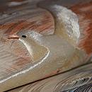 青海波にカモメの図丸帯 質感・風合