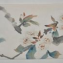 桜枝にヒヨドリの図名古屋帯 前中心