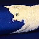 白い子猫の染名古屋帯 質感・風合