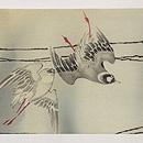 百舌鳥の図名古屋帯 前中心