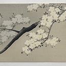 満月に夜桜染名古屋帯 前中心