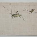 虫籠刺繍麻名古屋帯 前中心