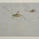 虫籠に虫たちの刺繍名古屋帯 前中心