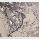 満月に桜刺繍帯 前中心