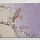 春霞、梅に鶯刺繍名古屋帯 前中心