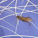 秋野に虫の刺繍単衣 質感・風合