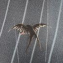 雨にツバメの単衣小紋 質感・風合