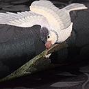 ウグイスに燕刺繍の名古屋帯 質感・風合