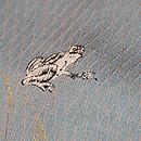 立涌にカエルの小紋 質感・風合