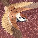 舞い踊る雀の名古屋帯 質感・風合