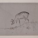 鹿文様絽の名古屋帯 前柄